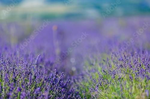 Fotobehang Lavendel Lavender.