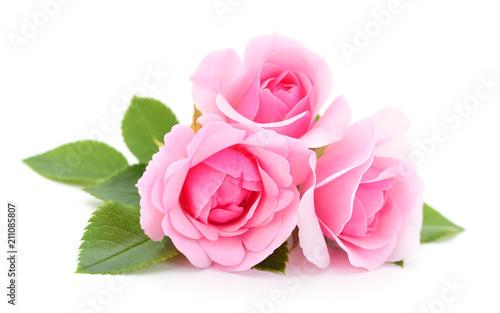 Foto Murales Beautiful pink roses.