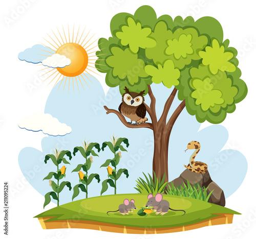 Fotobehang Uilen cartoon Crop Farm and Wild Animals