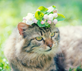 Portrait of a cat with tulip flower on the head, lies in the grass on the garden in spring