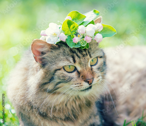 Portrait of a cat with tulip flower on the head, lies in the grass on the garden in spring - 211097270