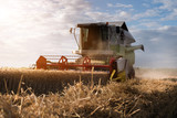 Harvesting of wheat field with combine - 211103692