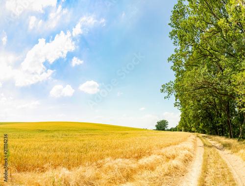 Fotobehang Meloen Alter Landweg im Sommer