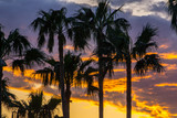 Mallorca, Glowing orange sky over palm trees in paradise - 211119454