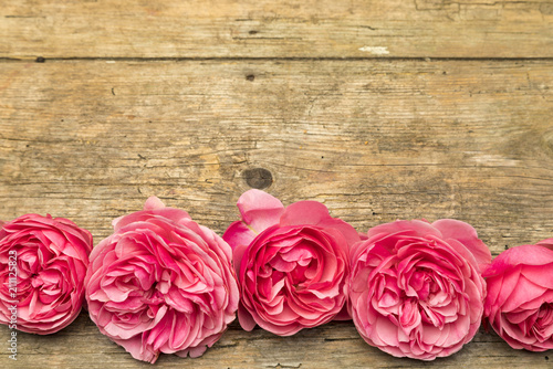 Floral background with pink rose blossoms