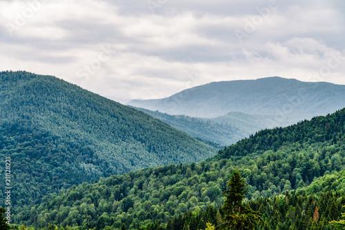 Fototapeta Carpathian Mountain Forest With Evergreen Trees In Fog Mist Landscape