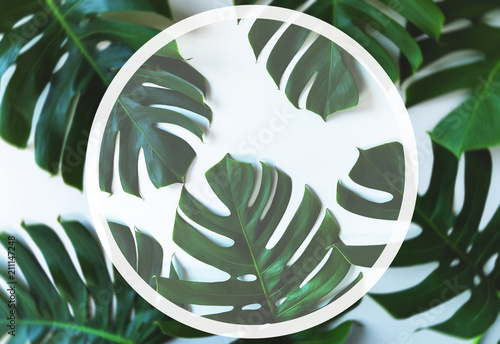 Tropical leaves and empty space for your logo or text