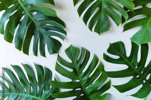 Foto Murales Tropical leaves on white background