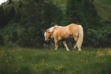 Pferd steht auf Wiese an einem Berg
