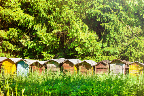 Fotobehang Geel Many beehives in a row on an apiary, greens around.