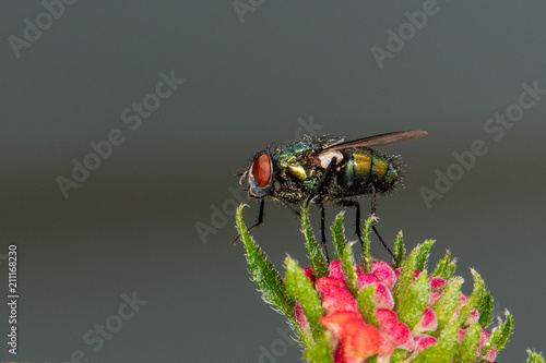 fly on a flower - 211168230