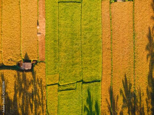 Aluminium Rijstvelden Rice fields of Bali island, Indonesia. Aerial view, top view.