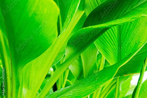Green leaves natural background wallpaper, leaf texture, green leaves wall background - 211211627