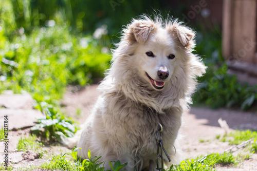 little yard dog on a chain - 211217864