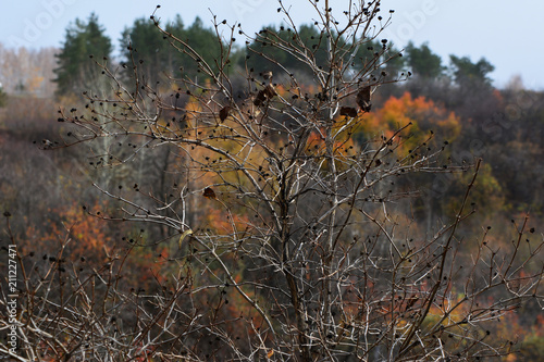 Plexiglas Herfst Bush with fallen leaves in autumn on the background of bright forest.