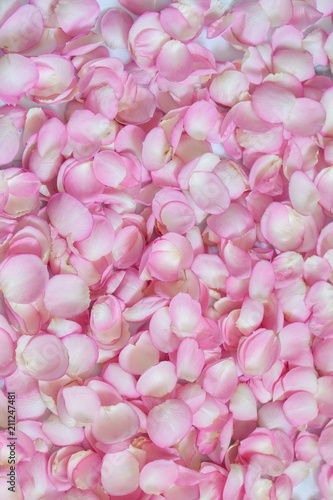 Pink rose petals. Background - 211247481