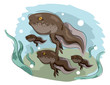 Frog Hind Legs Illustration