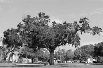 Black and White Tree