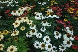 Flower composition in the garden