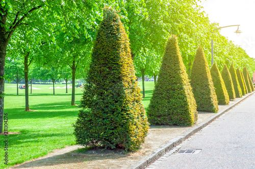 Trimmed trees in the park