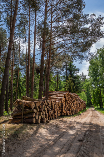 Sunny green forest in the summer, Poland