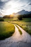 Feldweg und Getreidefeld im Sonnenuntergang, Harmonie  - 211313243