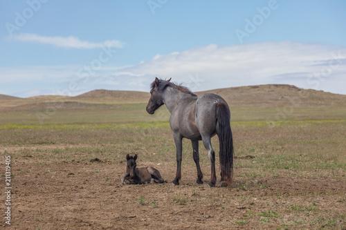 Fototapeta Wild Horse Mare and Foal