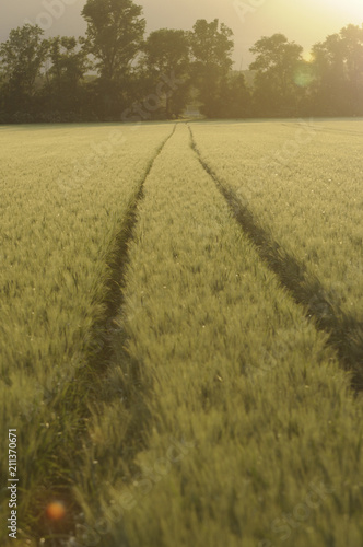 Aluminium Trekker Tractor signs in crop field, Austria, Lower Austria, Vienna area