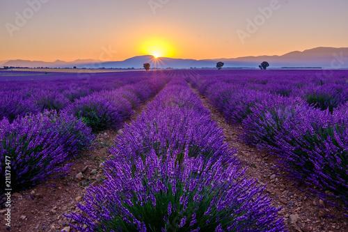 Foto Spatwand Violet Champ de lavande avec des arbres et montagnes en arrière-plan. Lever de soleil. Plateau de Valensole, Provence, France.