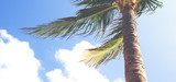 Palm tree against a blue sky on a windy day. Cover photo or banner use with copy space. Image has a vintage effect applied. - 211376866