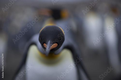 Aluminium Pinguin Antarctica