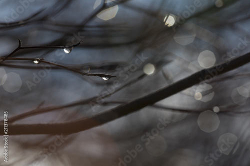 macro water drops on tree - 211378485