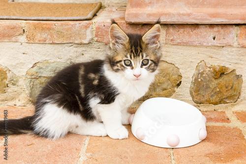 Fotobehang Kat gattino beve