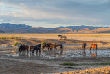 Wild Horses at a Desert Waterhole © natureguy