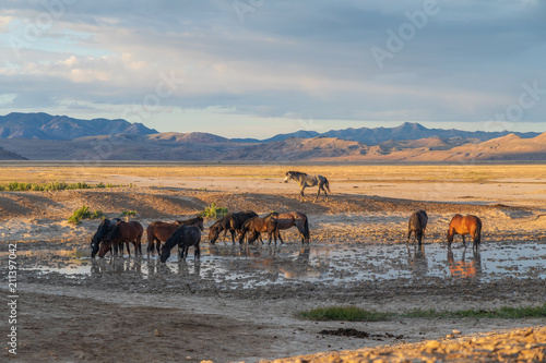 Fotobehang Paarden Wild Horses at a Desert Waterhole