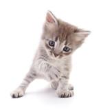 Small gray kitten. © olhastock