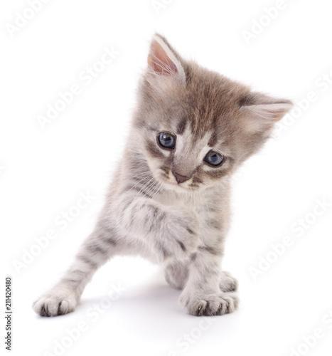 Fotobehang Kat Small gray kitten.