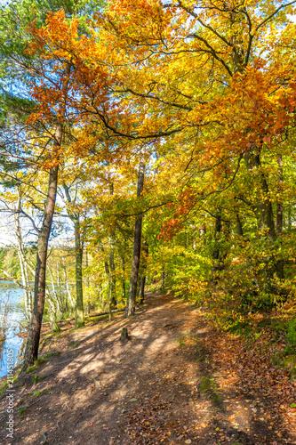 Plexiglas Herfst Autumn forest, fall landscape