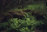 Fern bushes in a forest covered with moss - 211468470
