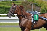 cheval de courses - 211494646