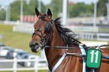 cheval de courses - 211494881