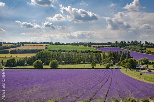 Aluminium Pistache English Lavender Fields