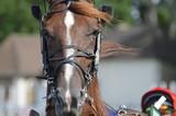 cheval de courses - 211496046