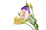 eustoma flowers isolated