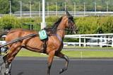 cheval de courses - 211497060