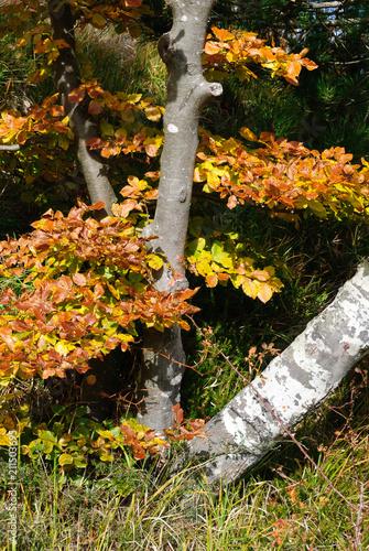 Aluminium Zwart Bocco lake on the Bocco pass in the autumn season in Liguria in Italy