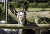 Donkeys on farm - 211505001