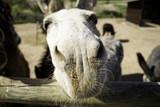 Donkeys on farm - 211505040