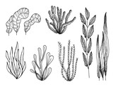 algae set of sketches vector drawings isolated