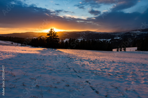 Aluminium Zonsopgang Winter sunrise with lonely tree, Little Poland landscape